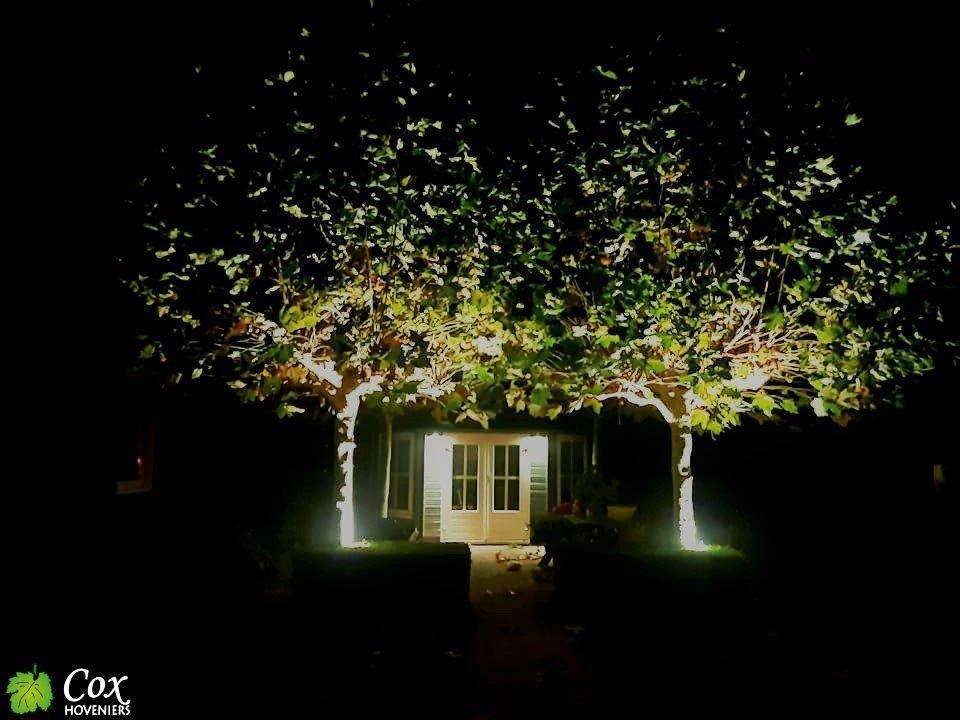 Cox Hoveniers verlichting